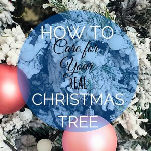 How to Care for Your Real Christmas Tree